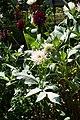 Flower @ Square Charles-Péguy @ Coulée Verte René-Dumont @ Paris (29268176805).jpg