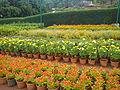 Flower - garden.jpg