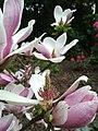 Flowers in Kórnik Arboretum.jpg