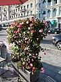Flowers in Stockholm in 2019.jpg