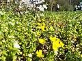 Flowers of Strzeszynskie Lake in Poznan (1).jpg