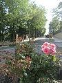Flowers on the street (Balatonfüred).JPG