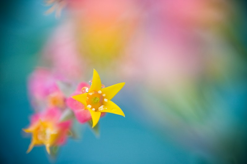 File:Flowers through humid glass.jpg