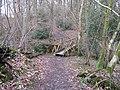 Footbridge over stream in Upper Barn Hanger - geograph.org.uk - 1734382.jpg