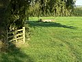Footpath at Knob Farm - geograph.org.uk - 1485145.jpg