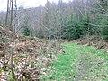 Footpath to Garth through Tower Wood - geograph.org.uk - 710611.jpg
