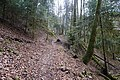 Forêt @ Alex (51098357730).jpg