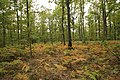 Forêt Départementale de Méridon à Chevreuse le 29 septembre 2017 - 39.jpg