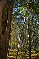 Forêt de Rambouillet — automne 2018 (8).jpg