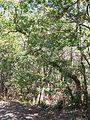 Forêt de la Coubre 025.jpg