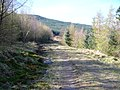 Forest Track in Loch Wood - geograph.org.uk - 397576.jpg