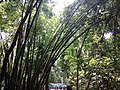 Forest bamboo.jpg