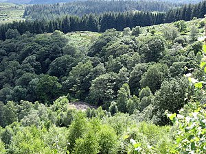 Gwynfynydd Gold Mine - Spoil heaps among the woods - 2007
