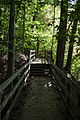 Forest path 01 - Mount Vernon.jpg