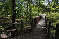 Forest path 06 - Mount Vernon.jpg