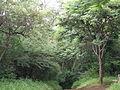 Forest photo 2.jpg
