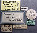 Formica obtusopilosa casent0104686 label 1.jpg