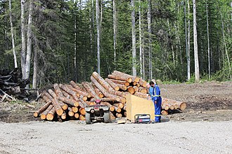 Fort Nelson, British Columbia - Fort Nelson Forestry