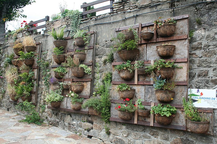 Fraisse-sur-Agout (Hérault) - jardin vertical.