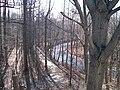 Frelinghuysen Arboretum Morristown Stream.jpg