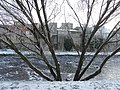 Frosty tree, Omagh - geograph.org.uk - 1653168.jpg