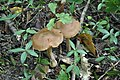 Fungus (8).jpg