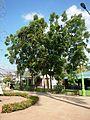 FvfBustosBulacan0138 26.JPG
