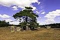Gålrums gravfält 01.jpg