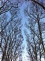 Gülhane Park trees - panoramio.jpg