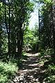 Główny Szlak Beskidzki - Path to Smerek 08.jpg