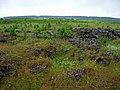 G. Nizhnyaya Tura, Sverdlovskaya oblast' Russia - panoramio - Oleg Seliverstov (26).jpg