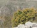 Gamla in Golan 02.jpg