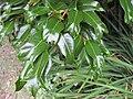 Gardenology.org-IMG 2296 rbgs11jan.jpg