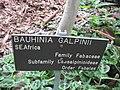 Gardenology.org-IMG 2619 rbgs11jan.jpg