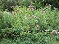 Gardenology.org-IMG 2690 rbgs11jan.jpg