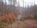 Gdańsk Oliwa, skocznia narciarska (TPK) - (Panoramio 16482383).jpg