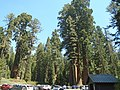 General Grant Tree Area.jpg