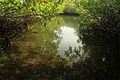 Gfp-florida-keys-key-largo-mangrove-creek.jpg