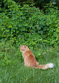 Gillie hunting (5904876000).jpg