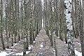Gmina Narew, Poland - panoramio (39).jpg