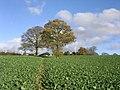Gorst Hill Farm - geograph.org.uk - 284986.jpg