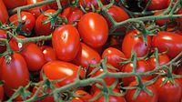 Grape tomatoes on the vine at Ljubljana Central Market.JPG