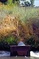 Gray Lodge WLA0042 (26706537222).jpg