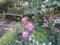 Green Spring Gardens Fall 2013 (10106900644).jpg