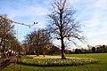 Greenwich Park - geograph.org.uk - 2341195.jpg