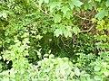 Greenwood forest farming 17.JPG