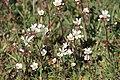 Grevie åsars naturreservat 2020-2.jpg