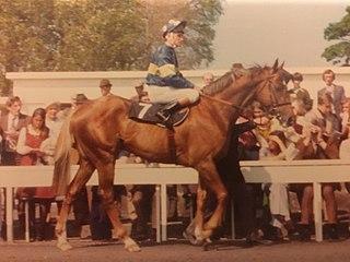 Grundy (horse) Irish-bred Thoroughbred racehorse