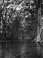 Guadalupe River B&W (32985215706).jpg