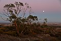 Gum and Moon (26070285554).jpg